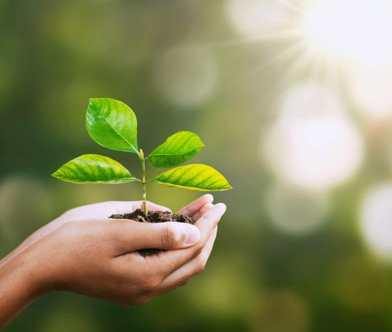 händer som håller i en bladväxt